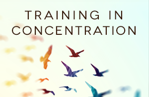 training-in-concentration-small-web-banner